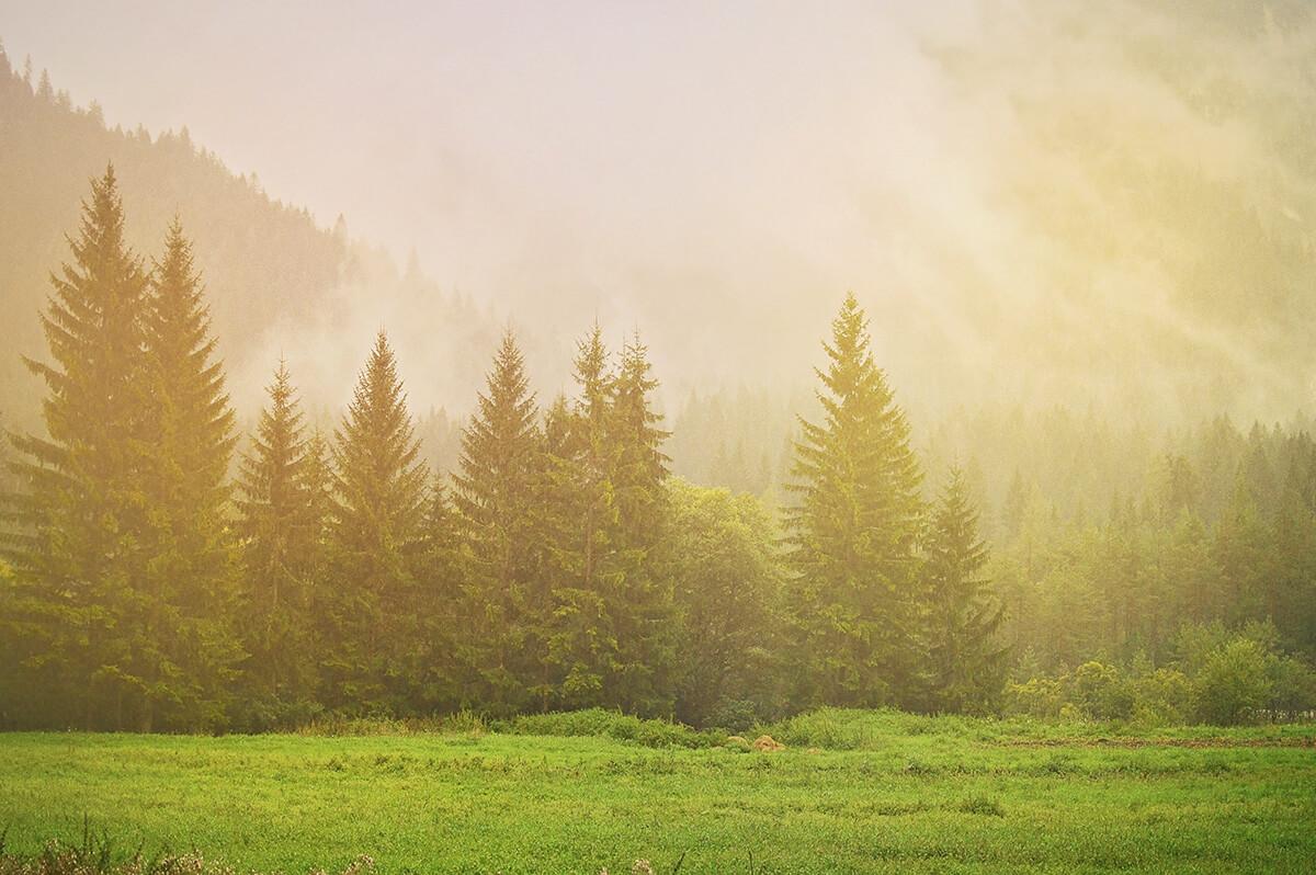 mondeox-riforestazione